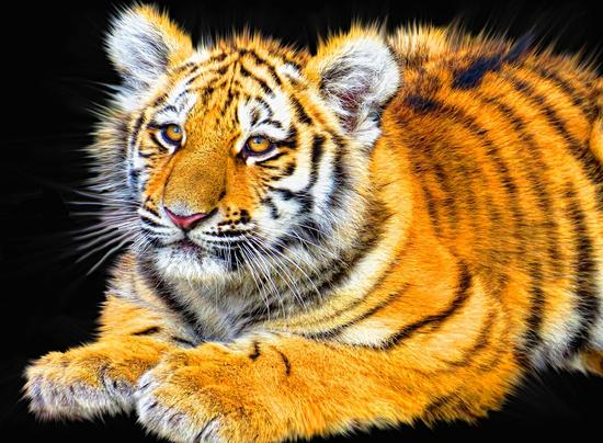 The Top 5 Tech Holdings of Tiger Global