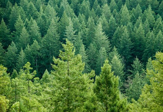 Boise Cascade: A Lumber Industry Stock With a Value Look